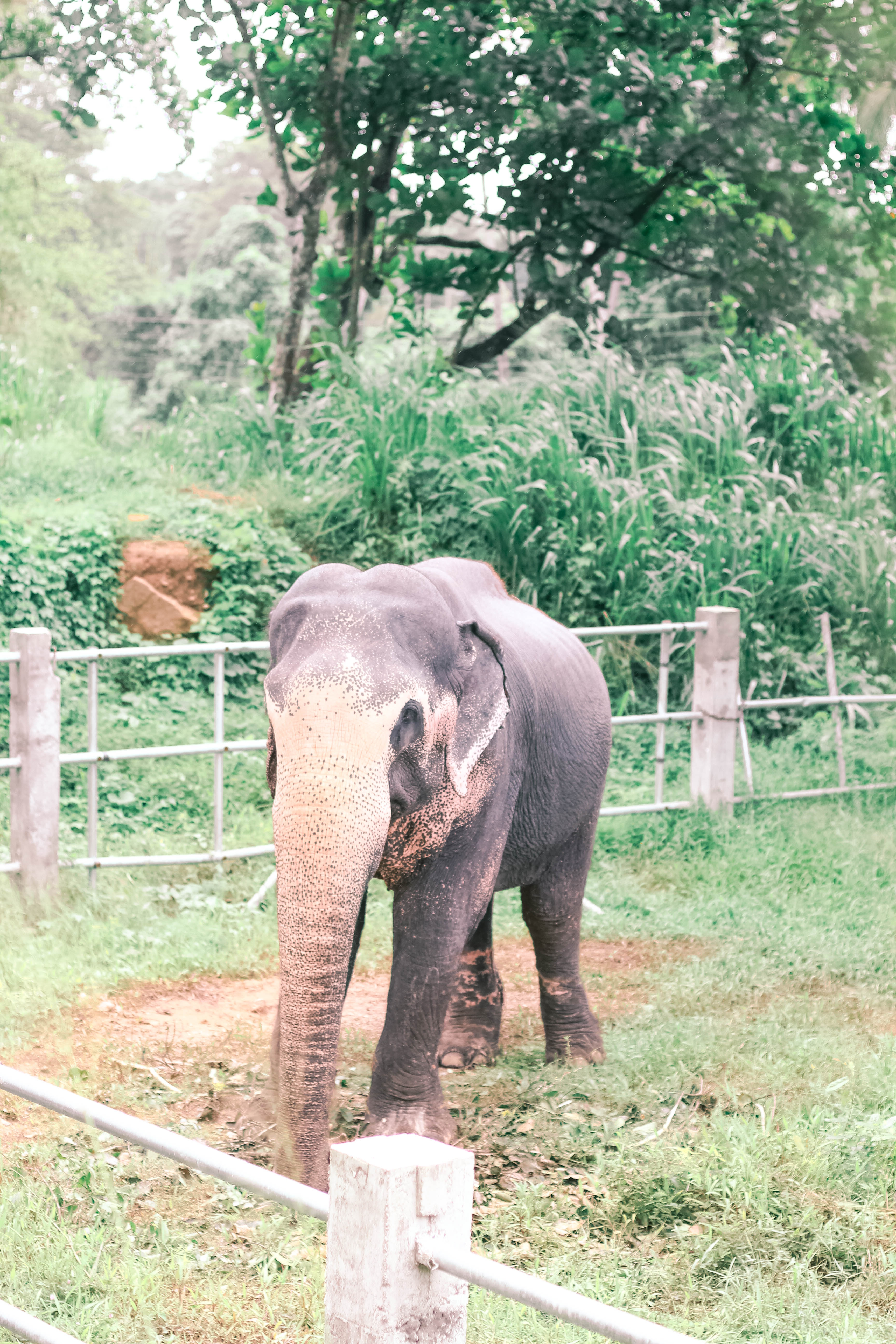 5 THINGS YOU CANT MISS IN KANDY SRI LANKA | the belle abroad